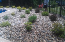 Merrimac Plantings (after)